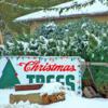 christmas-tree-lot