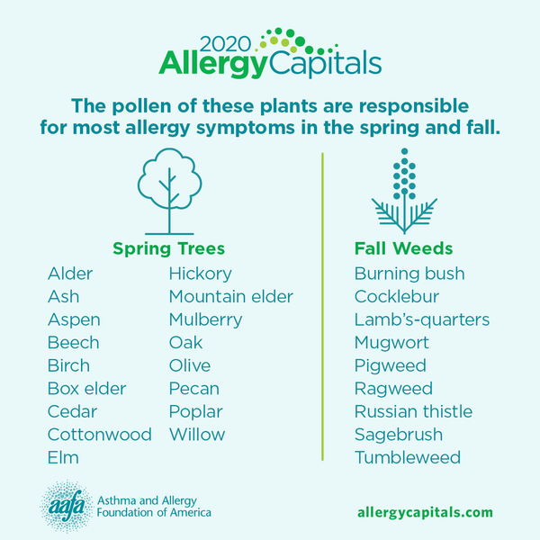 Plants that cause spring and fall pollen allergies