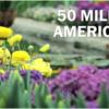 Why Seasonal Allergies Make You Miserable - Washington Post