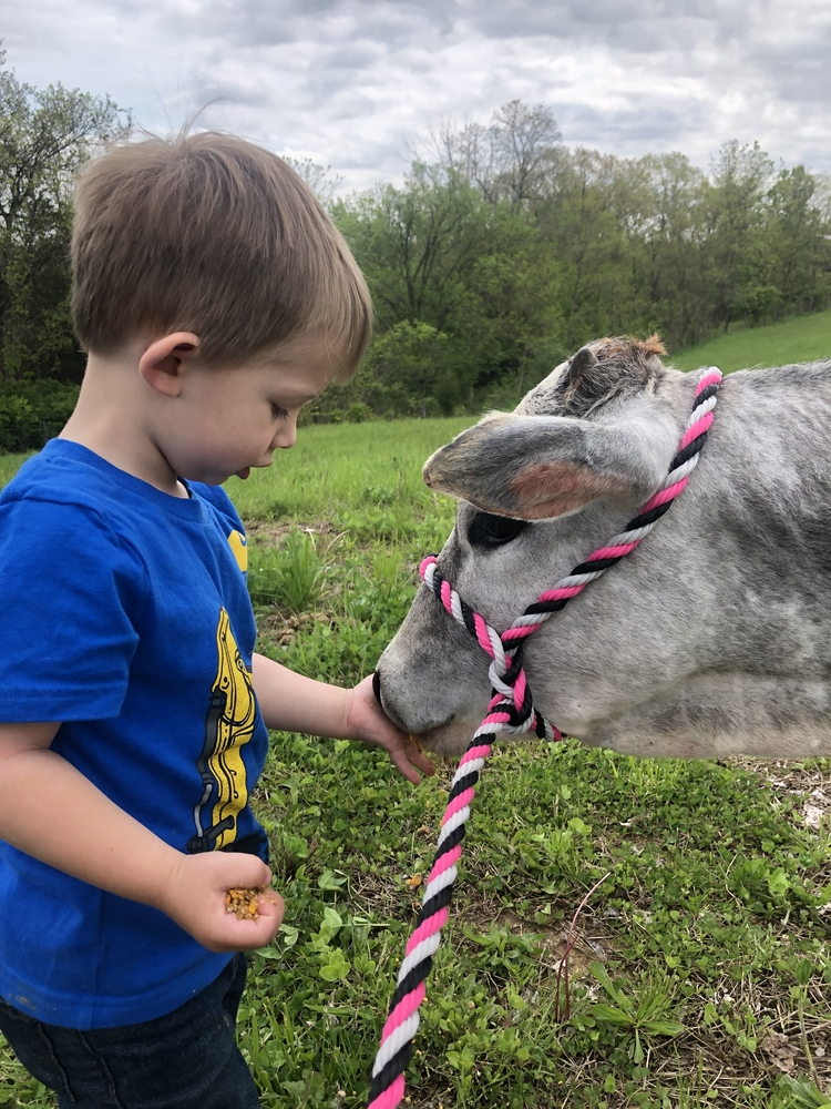Grayson and Summer (his Miniature Zebu heifer)