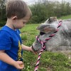 Grayson and Summer (his Miniature Zebu heifer)