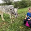 Grayson and his Miniature Zebu heifer Summer