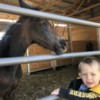 Grayson and Earl (9 day old Friesian Sporthorse Colt)