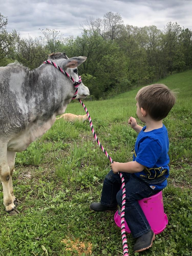 Grayson and Summer (Miniature Zebu heifer)