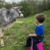 Grayson and Summer (Miniature Zebu heifer)