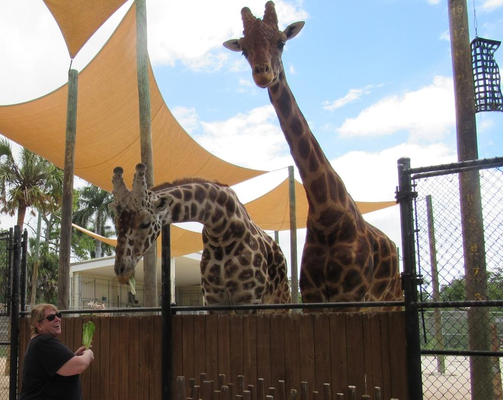 Feeding Giraffes!