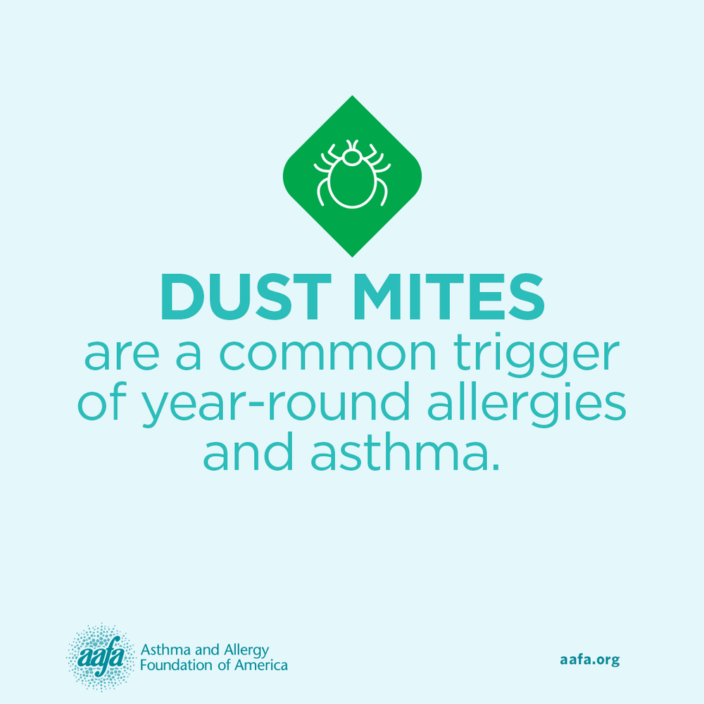 Asthma & Allergy Education: Dust Mites are Common Year-Round Triggers